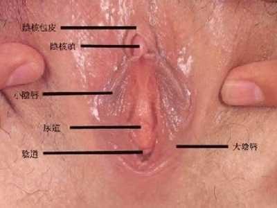 女孩生殖器图 18成熟女性外生殖器真人放大实图照片