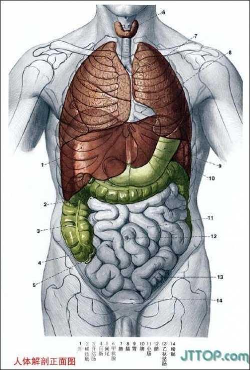 结构图解_男性,女性生殖系统(真实图例)★ 女性内生殖系统 卵巢 子宫