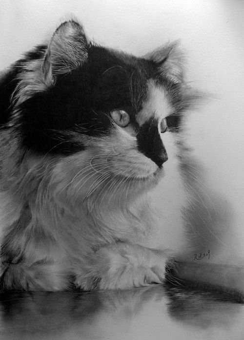 动物素描画 铅笔画之用铅笔画出超写实动物素描